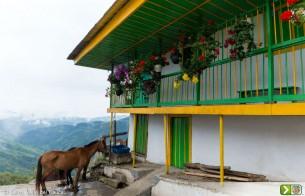 Das crises ao turismo cultural, a Colômbia reinventa o ciclo econômico do café