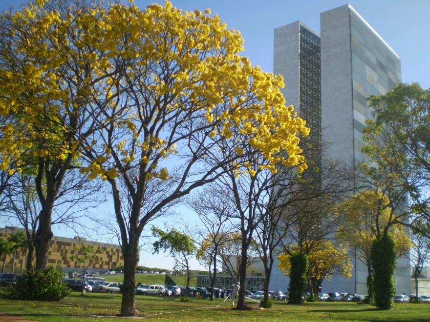 DF_Brasilia_Ipe_Congresso_PatrimonioMundial