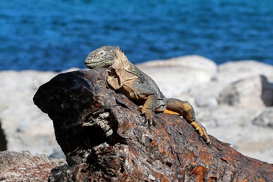 Internacional_Ilhas_Galapagos