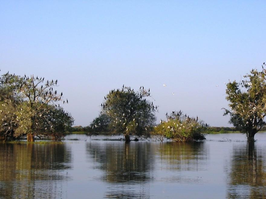 REG_Pantanal