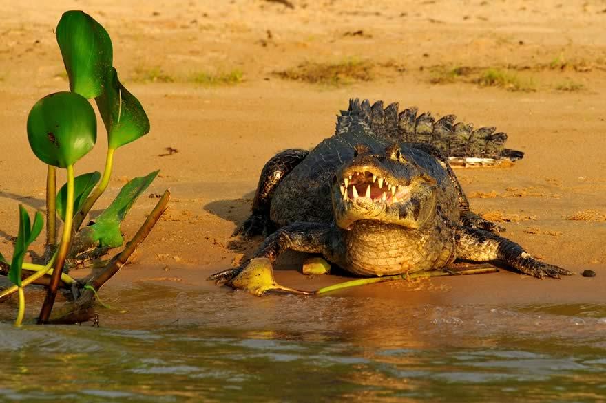 REG_Pantanal_Fauna